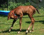 Warmblood Foal .:Stock:.