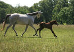 Mare and Foal .:Stock:.