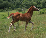 Warmblood Filly 3 .:Stock:.