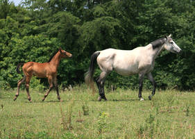 Mare and Foal 2 .:Stock:. by Photopolis