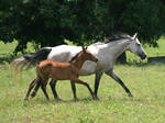 Mare and Foal 4 .:Stock:.