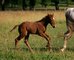 Warmblood Foal 3 .:Stock:.