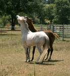 Horse Interaction 11 .:Stock:.