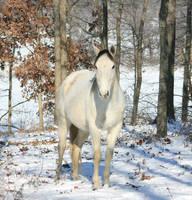 Gray Winter 2 .:Stock:. by Photopolis