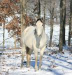 Gray Winter 2 .:Stock:.