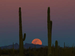 Full moon rising by finhead4ever