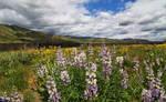 Idaho wildflowers by finhead4ever