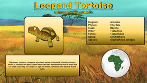 Animal Bestiary - Leopard Tortoise