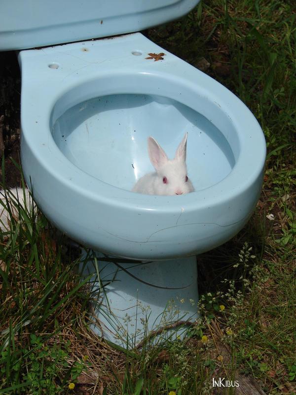Beware of albino toilet bunny2 by InKibus