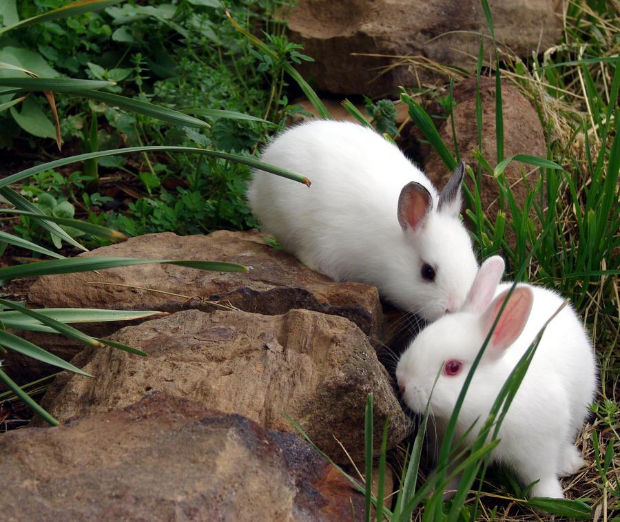 Valentine Bunnies by InKibus