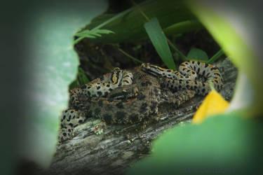 Rattlesnake mother 4