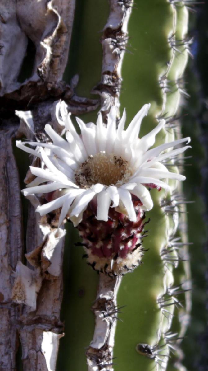 Cactus by Magadar
