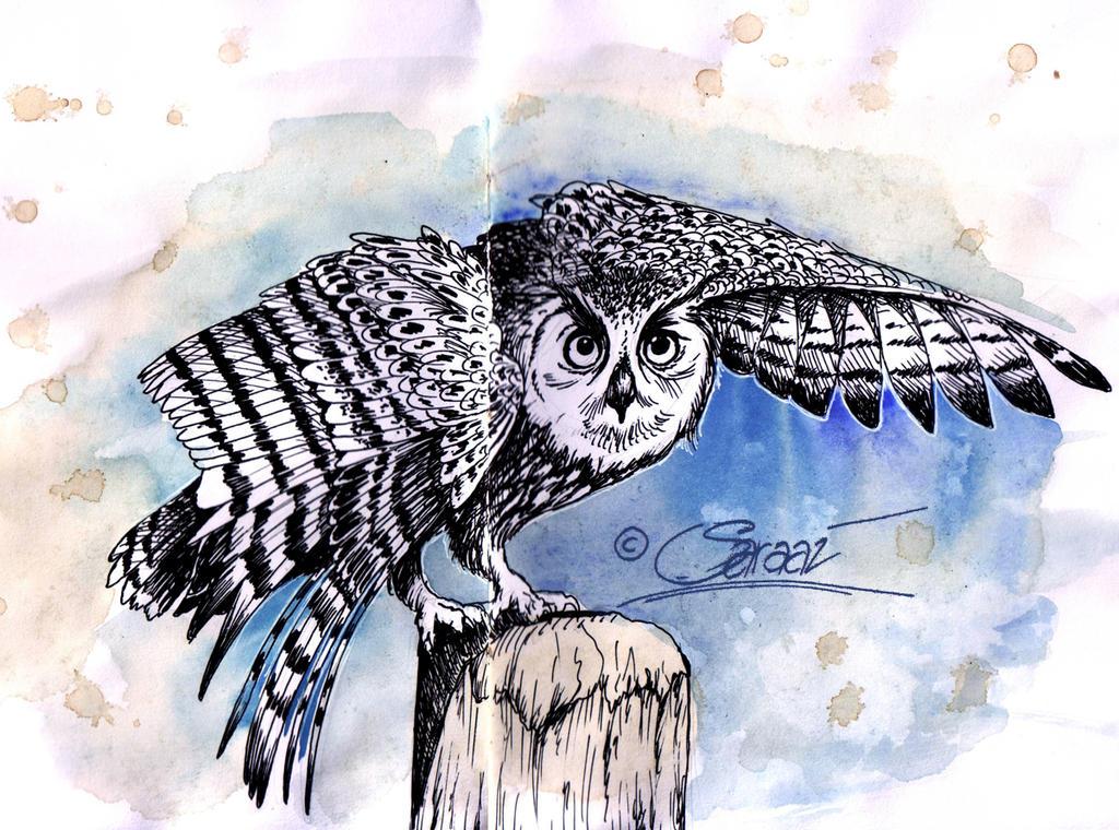 Owl by Saraais