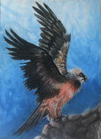 ACEO: Woodswallow