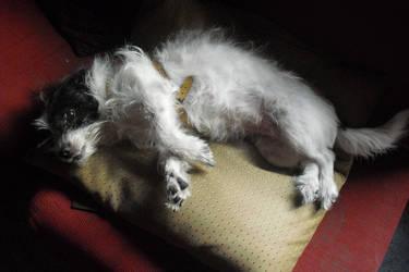 perro descansando, no molestar by weresoul