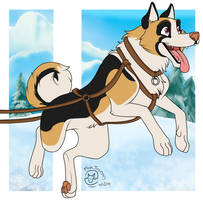 Andreus the Sled Dog