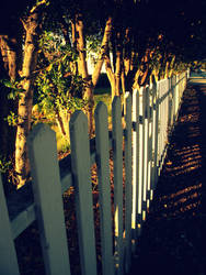 white picket fence by jennycaterpiller