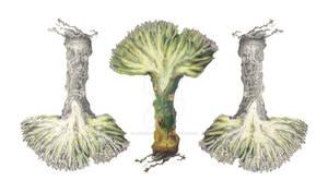 Coral Cactus Botanical Illustration