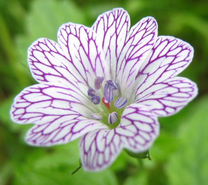 Tiny flower by tircisia on deviantart tiny flower by tircisia mightylinksfo
