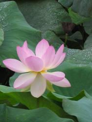 Zen by Tircisia