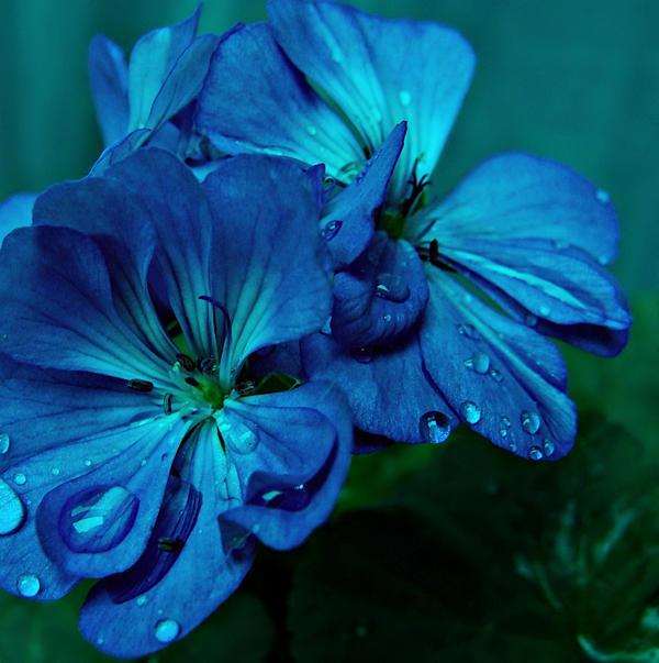 Plavo kao ... - Page 5 Secret_blue_by_appleplusskeleton
