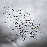 the ballad of the broken birds