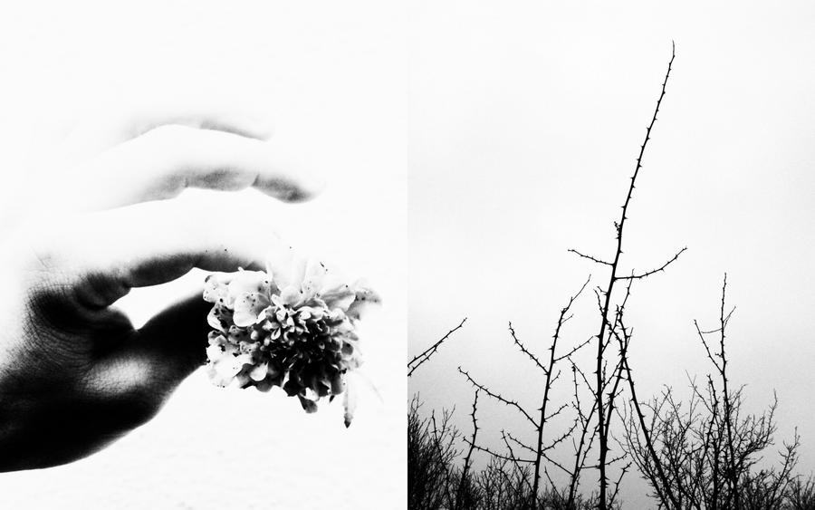 thorns that bloom by PsycheAnamnesis