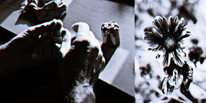 flowers, not bullets by PsycheAnamnesis