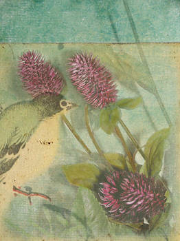 Thistle and Bird