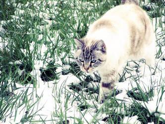 Her First Snow by heiji-cas-dean