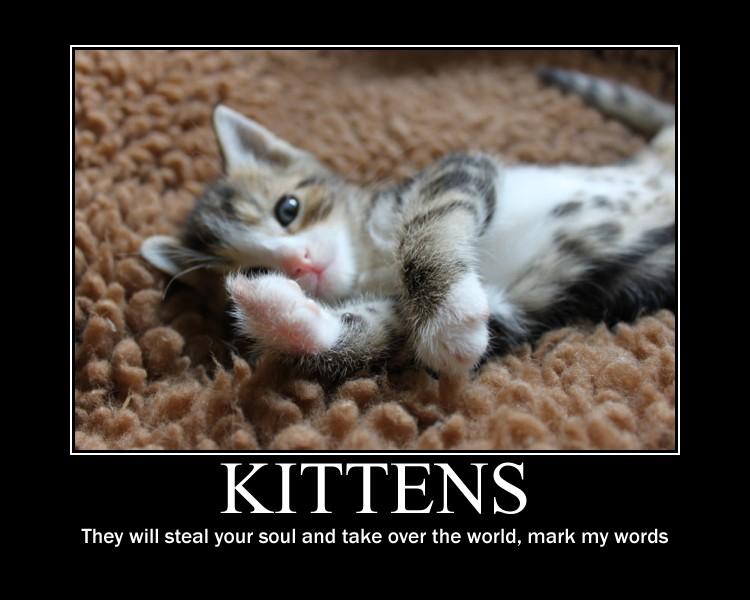 Goodbye Cat Meme