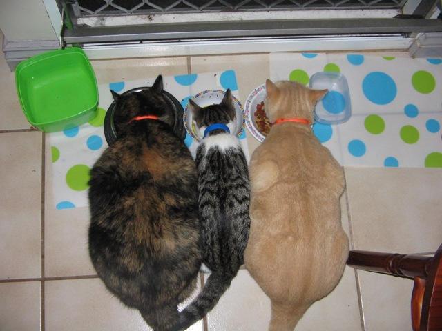 Cats by millicat