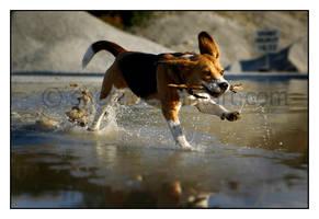 -dog's life- by Snert