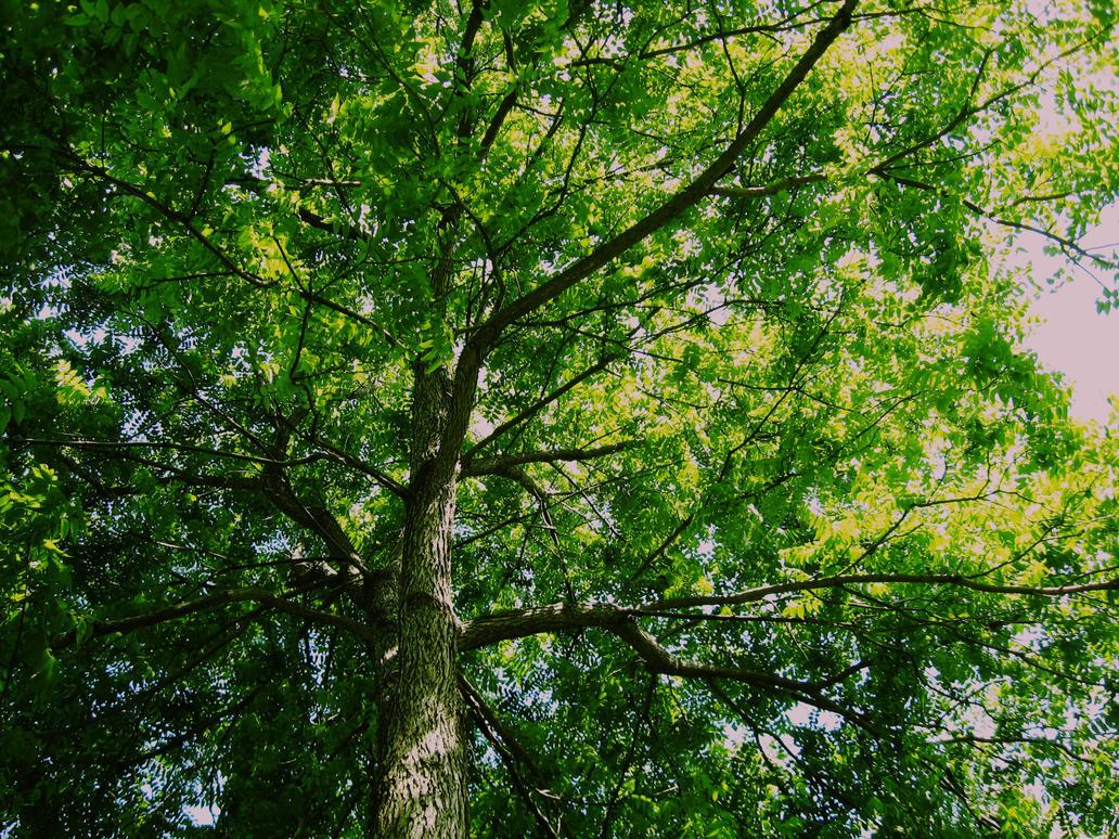 Walnut Tree By 2315zhz Photography Animals Plants Nature