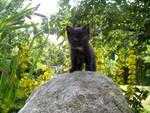 I climb the top point myself by R-I-O-N