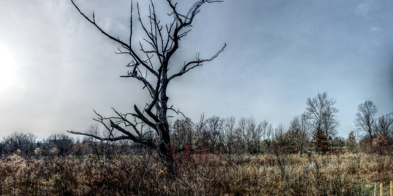 Panorama 3174 blended fused pregamma 1 mantiuk06 c by bruhinb