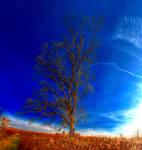 Panorama 3509 hdr pregamma 1 mantiuk06 contrast ma