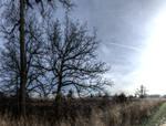 Panorama 3511 hdr pregamma 1 mantiuk06 contrast ma