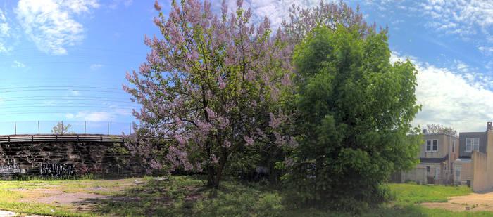 Panorama 4057 hdr pregamma 1 fattal alpha 1 beta 0