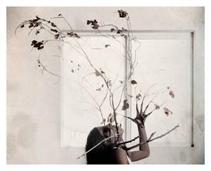 'i am tree' by glassdrum