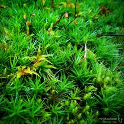 Miniature forest by ballisticpixels