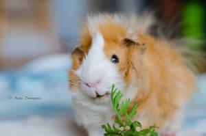 I love veggie... by TheLittleMaja