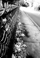 Fence by seabug
