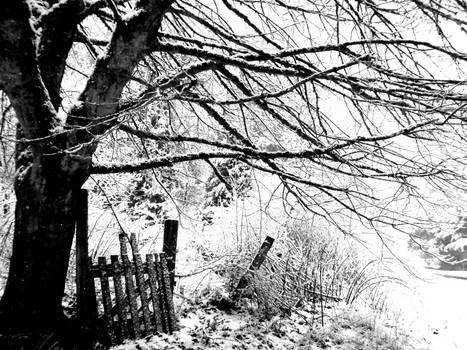 Snowy Branches and a Fence