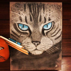 Tabby Cat in Pastels
