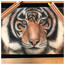 Tiger drawn with Pastels