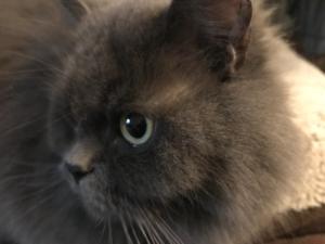 autumnstorm08's Profile Picture