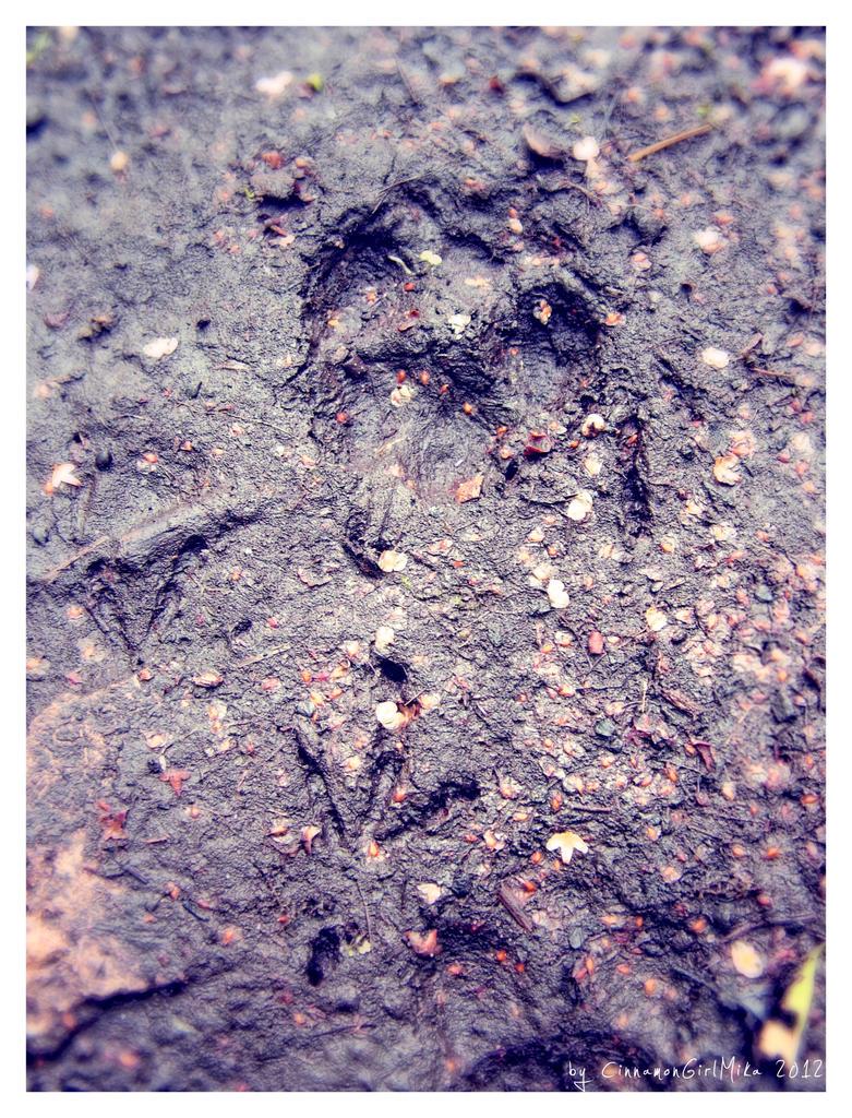 A Byrd, A Fox, A Chase by CinnamonGirlMika