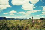 Giraffe in Wide Angle