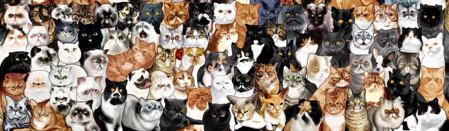 #Catminaproject Final by jimiyo